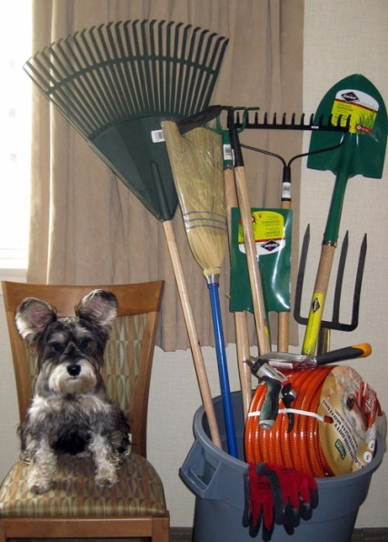 my dog max and the garden tools from my coworkers at icbc