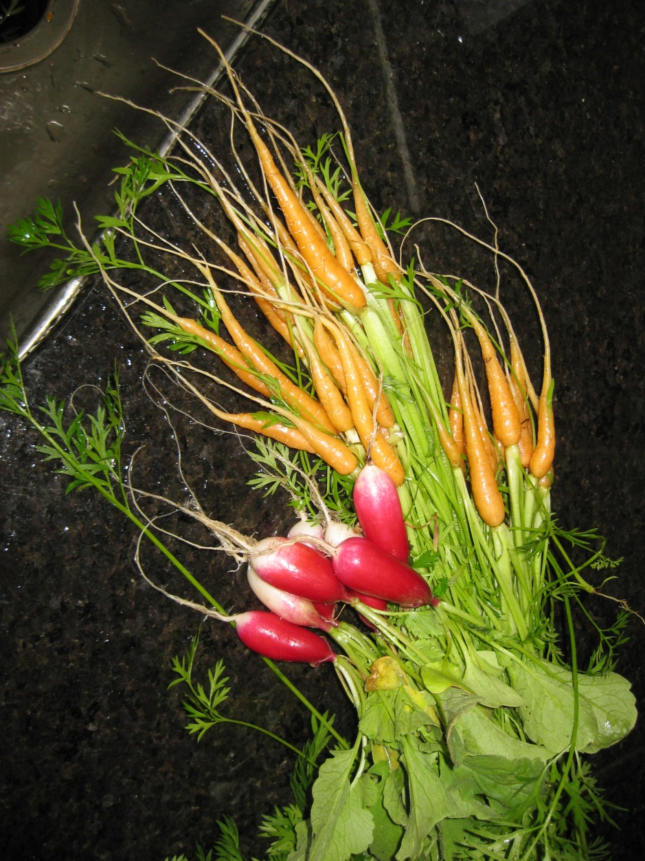tiny carrots with beets