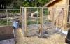 chickens...someday